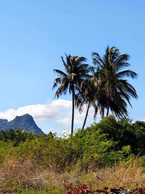 my-mauritius-life-20